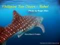 whaleshark-2-alona-jan-01-2010