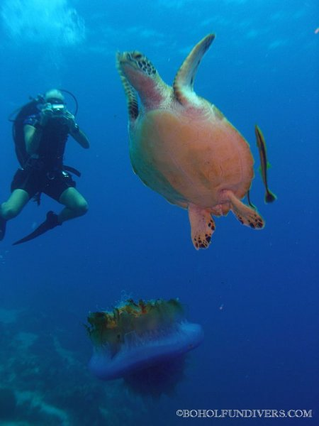 turtle-with-diver-3