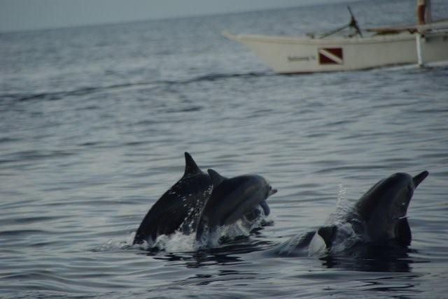 dolphins-3